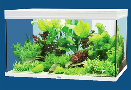 Acquario elegance plus 80 acquari ornamentali pesci for Pesci acquario tropicale